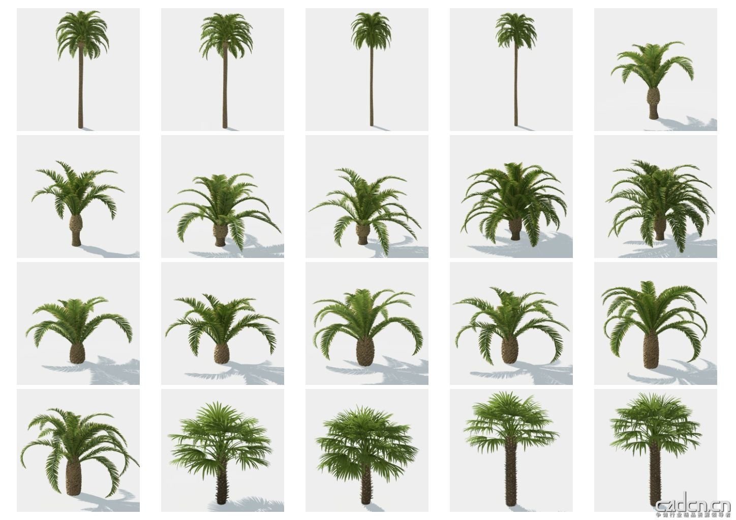 hq_palms_vol1_Contact-Sheet-3.jpg